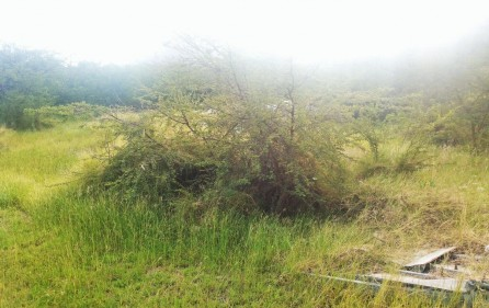commercial-investment-opportunity-carribean-land-for-sale-4