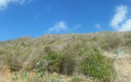 10-acre-hillside-development-land-for-sale-in-guana-bay-14