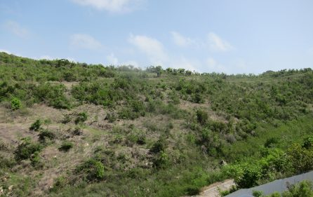 Hillside View